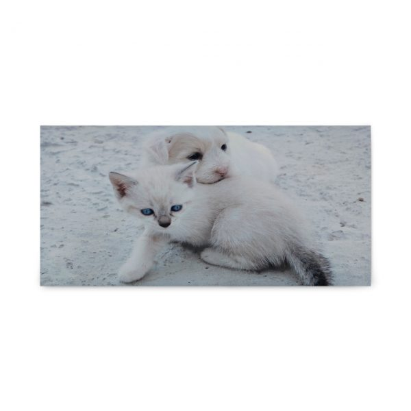 Adorable kitten and puppy on framed acoustic panel