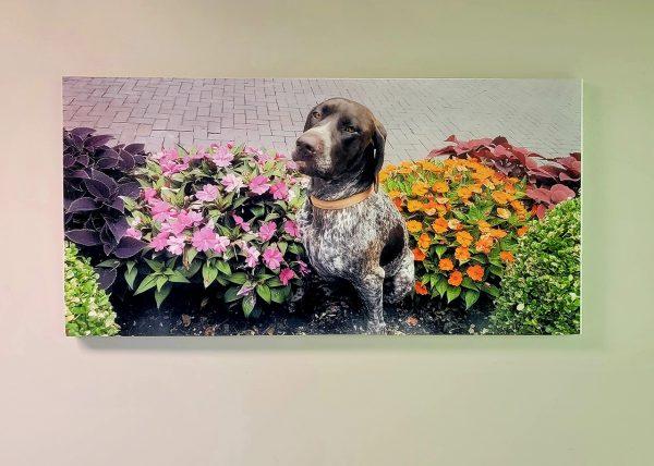 Happy dog on acoustic panel